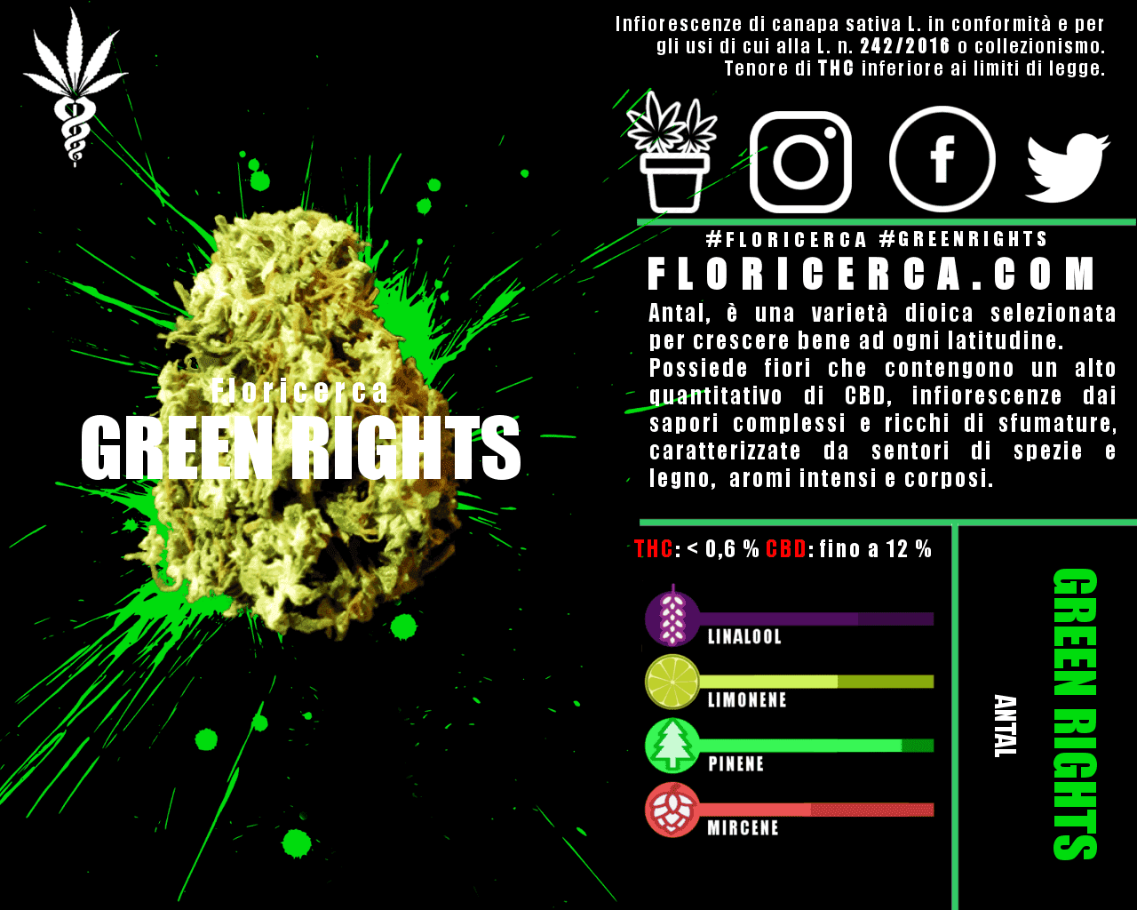 Floricerca – The Best Cannabis Buds grown in Italy